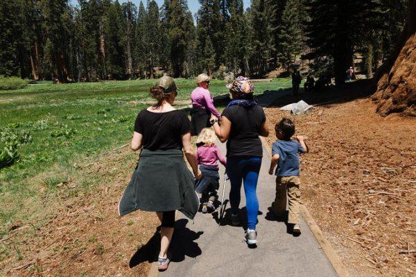 Sequoia camping